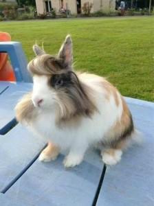 【画像あり】イケメン動物多いよな!このウサギも超イケメン!