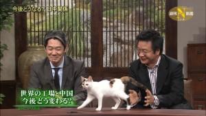 【画像あり】政治番組で自由に歩き回る猫がいる?!