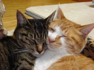 【画像あり】スヤスヤ眠る猫にきゅ~ん30連発!