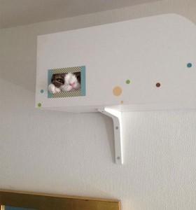【画像あり】ダウン症の猫の表情が愛くるしい