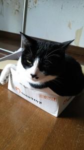 【画像あり】そこに箱があるから