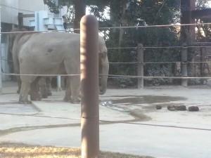 【画像あり】上野動物園に一人でキタから実況でもww
