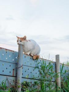 【画像あり】思わず「何してんの?」と聞きたくなる猫のしぐさ