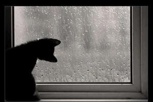 【画像あり】雨とネコ